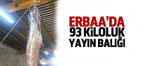 Erbaa'da 93 Kiloluk Yayın Yakalandı