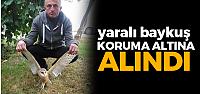 Erbaa'da Yaralı Peçeli Baykuş Koruma Altına Alındı