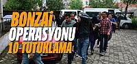 Erbaa'daki bonzai operasyonunda 10 tutuklama