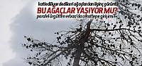FETÖ'den Erbaa'da Cerattepe Girişimi