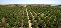 Tokat'ta 3,5 milyon fidan toprakla buluştu