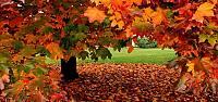 Turhal'da 3 gün yaprak süpürülmeyecek
