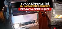 Zabıta'dan Sokak Hayvanlarını Erbaa'ya bırakanlara operasyon